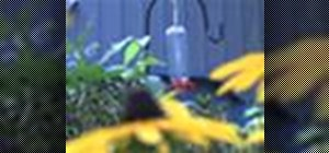 Build an awesome hummingbird feeder with items from around the house