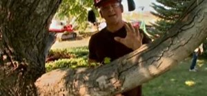 Operate a chainsaw and limb a tree