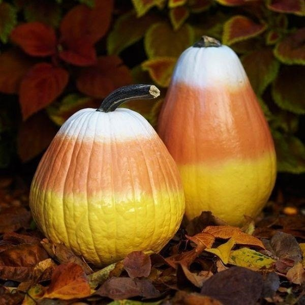 7 of the best pumpkin painting ideas that are creative yet simple rh hercampus com  fun creative pumpkin painting ideas