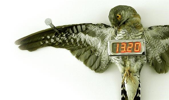 Real Life, Cold-Blooded Cuckoo Clock