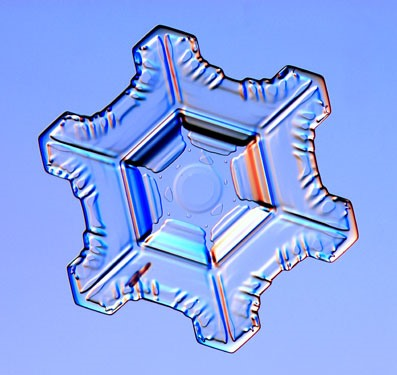 HowTo: Grow Your Own Snowflakes