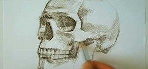 Draw a human skull