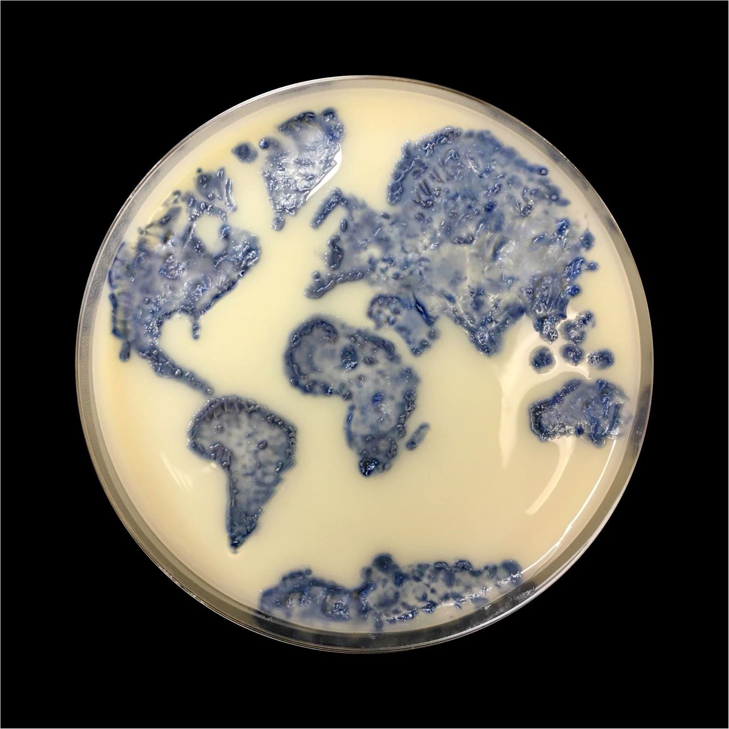Our 11 Favorite Bacteria Art Submissions from ASM's Petri-Dish Picasso Contest
