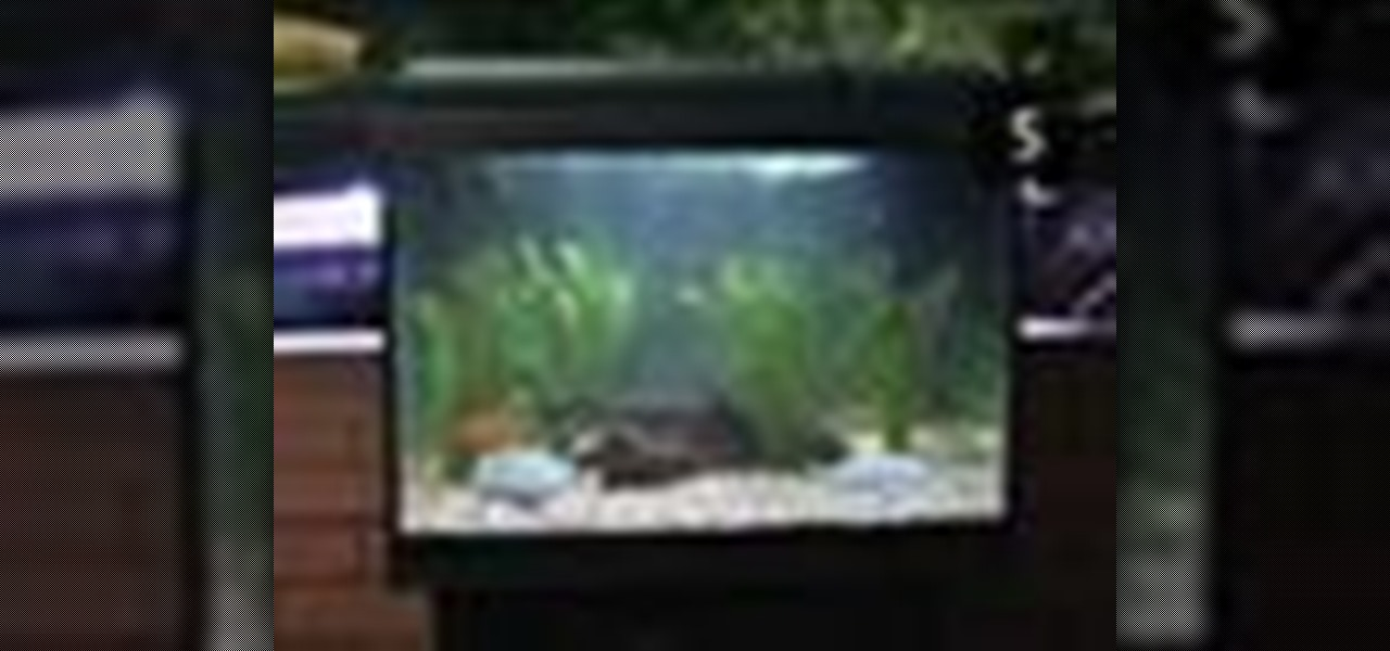 how to clean and maintain a fish tank fish