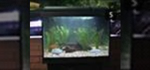 How to turn an old tv into a sweet fish tank macgyverisms for How to clean an old fish tank