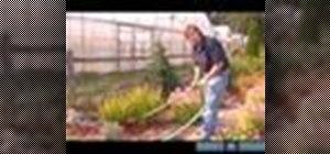 Transplant perennial irises