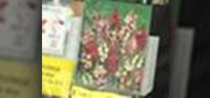Plant South African flower bulbs