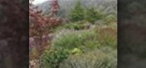 Create a drought resistant garden
