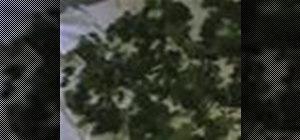 Dry stinging nettle herbs