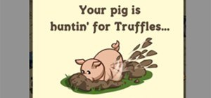 Truffle Hunting Guide