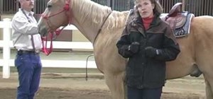 Fit a martingale on your horse