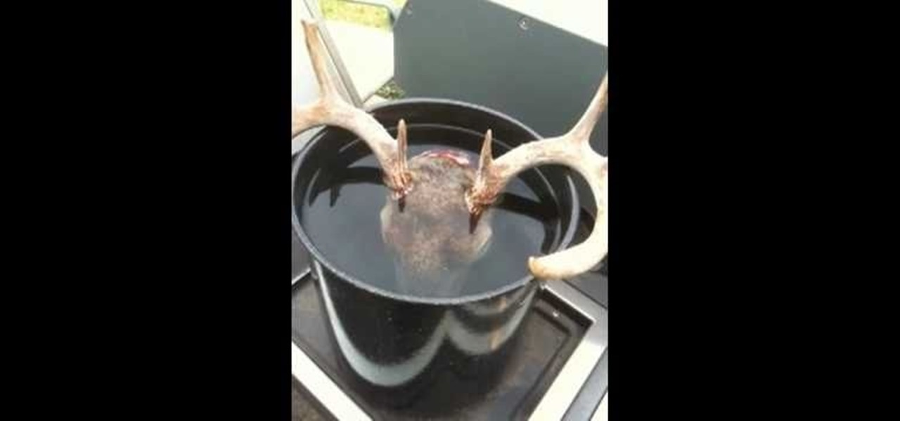 How To Prepare A Deer Skull For Mounting In The European