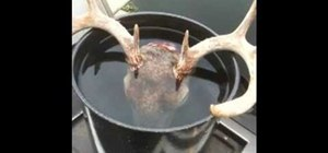 Prepare a deer skull for mounting in the European style