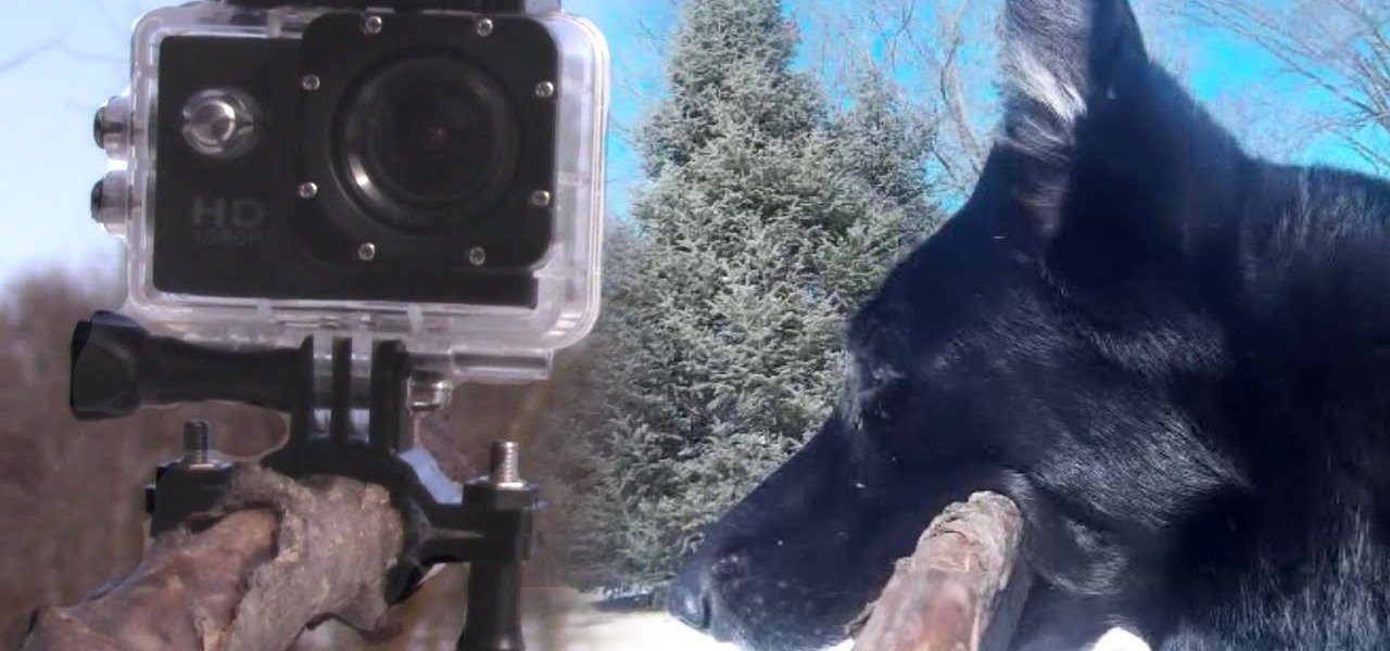 GoPro on Dog's Stick
