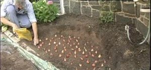 Plant 100 tulip bulbs in 50 minutes