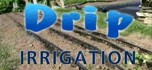 Use a drip irrigation system for your plants