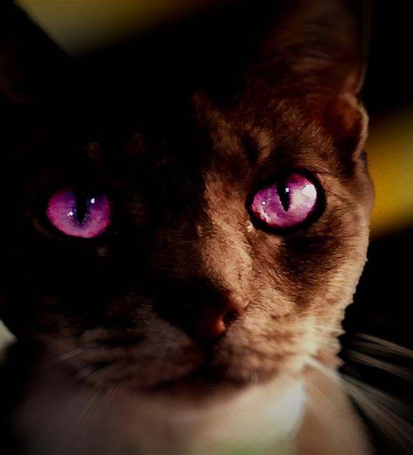 Bokeh Photography Challenge: (Sir) Thomas the Cat