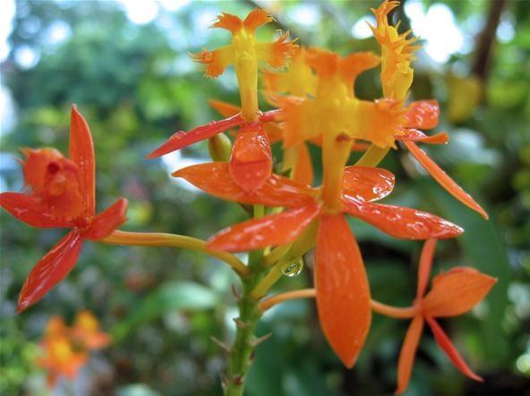 Vibrant Photography Challenge: Wet Flowers