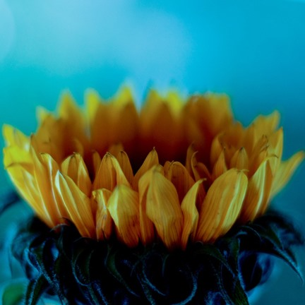 Get Inspired! 30 Examples of Vibrant Color Photography