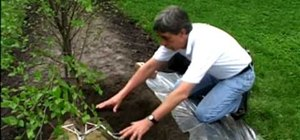 Plant a tree outside your home to save energy