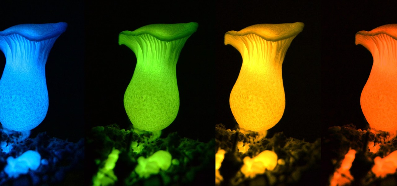 We've Finally Figured Out Why Some Mushrooms Glow