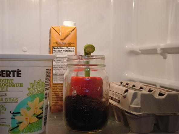 How to Reuse Old Coffee Grounds
