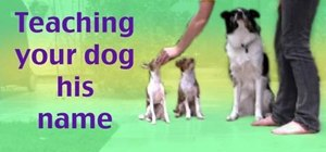 Teach your dog his name using clicker training