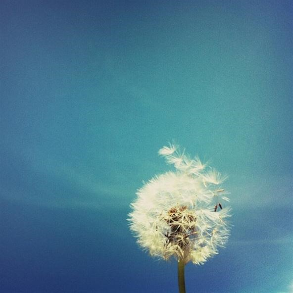 Filter Photography Challenge: Make a Wish