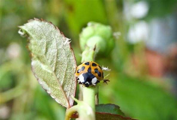Insect Photo: Don't Shoot Until You See the Whites of His (Compound) Eyes!