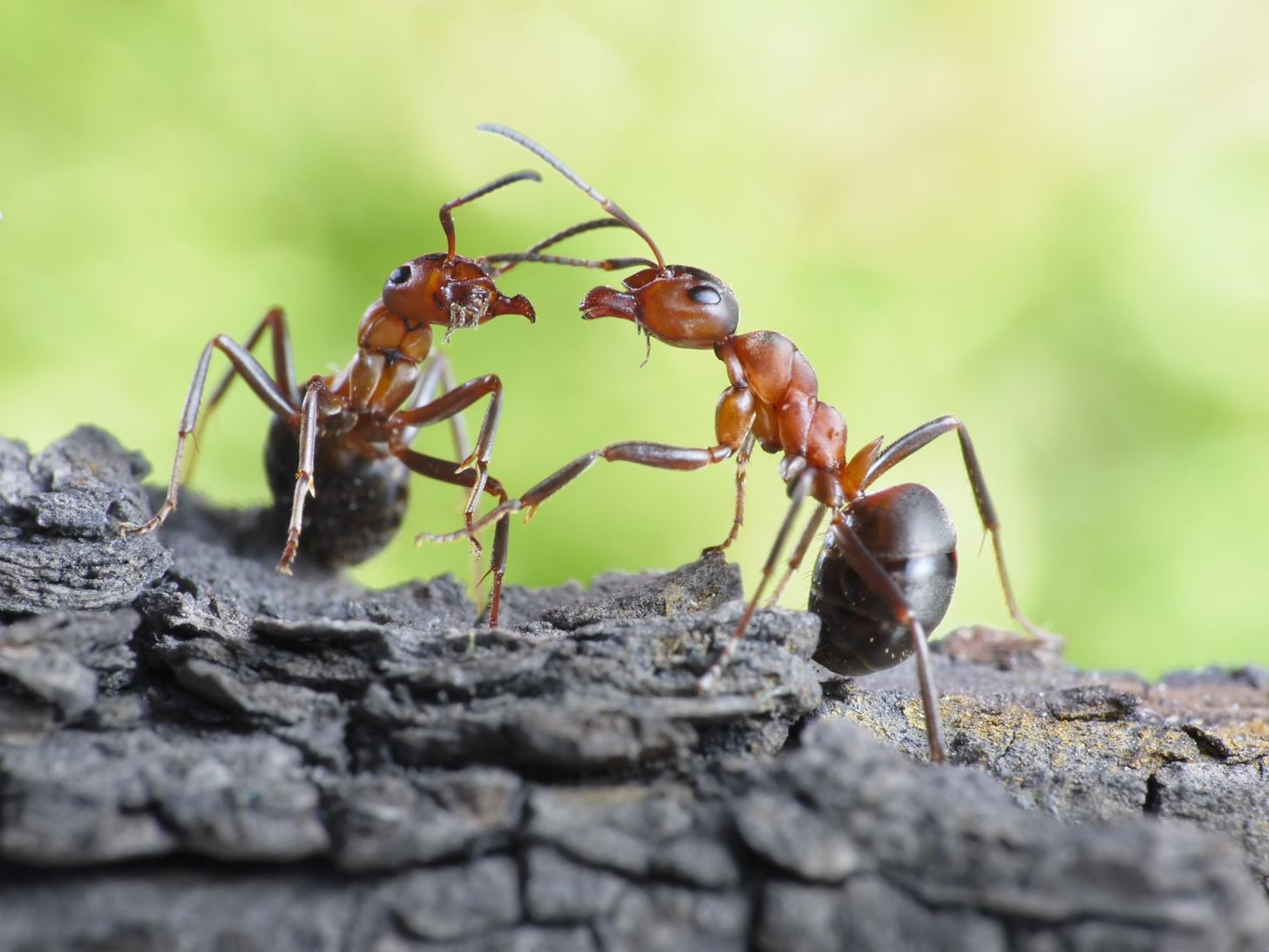Amazing Insects: Ants Create Chemical Cocktails to Brew Antibiotics