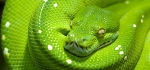 Learn to Code in Python, Part One: Variables, Input and Output