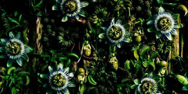 Azuma Makoto's Serious Flower Power