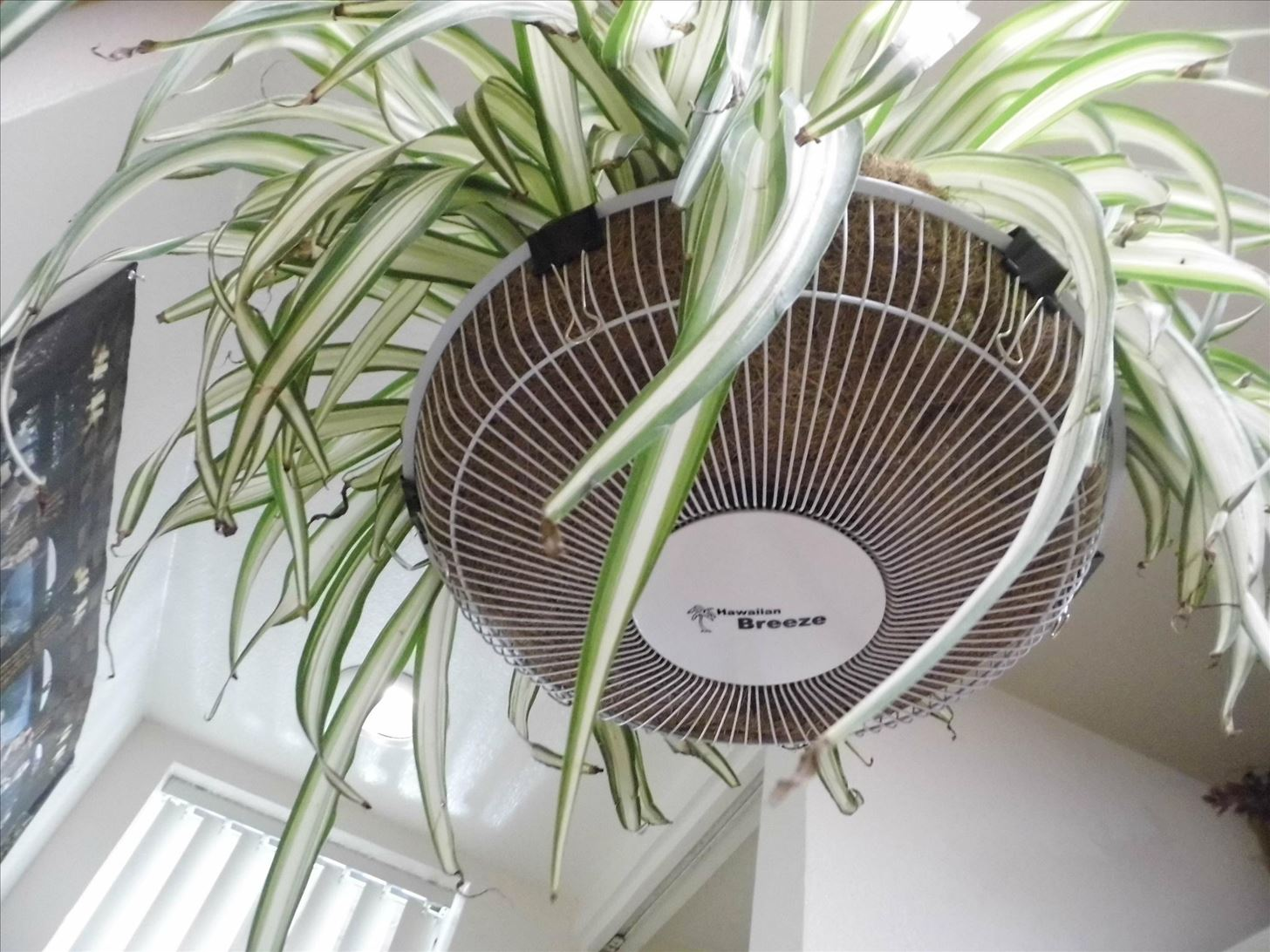 How to Turn an Old Fan Grille into a Decorative Plant Hanger