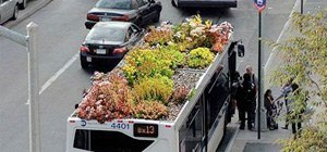 The Bus-Top Gardens of New York City