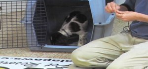 Acclimate your new puppy to its crate