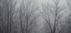 I love fog