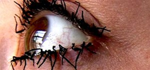 Dead Flylashes