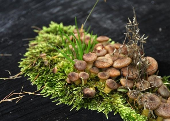 Mushrooms!