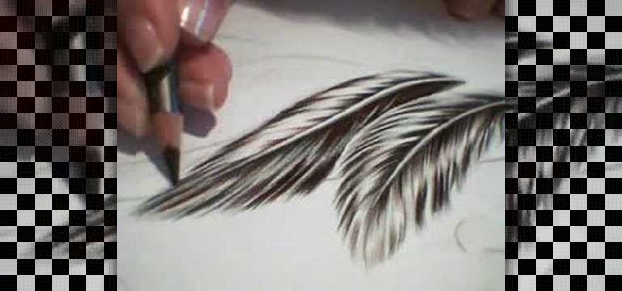 Simple Feather Sketch How to draw feathers