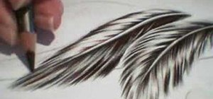 Draw feathers