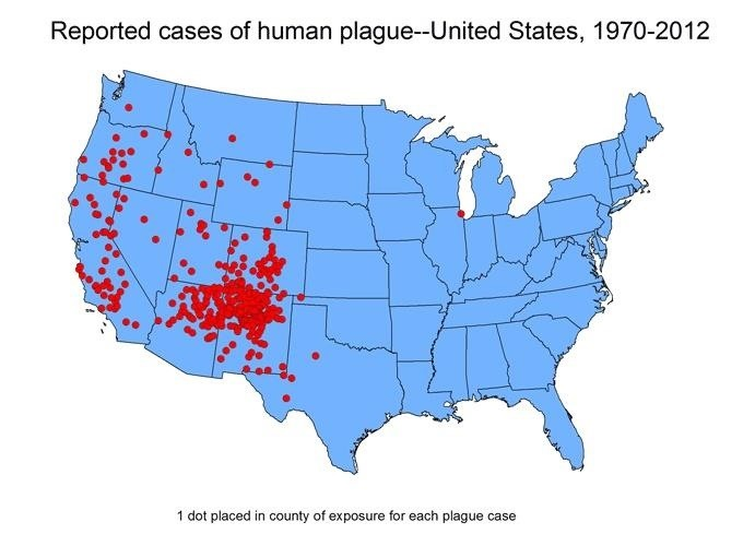 Bubonic Plague Is on the Rise in the US, but We Finally Know How to Treat It