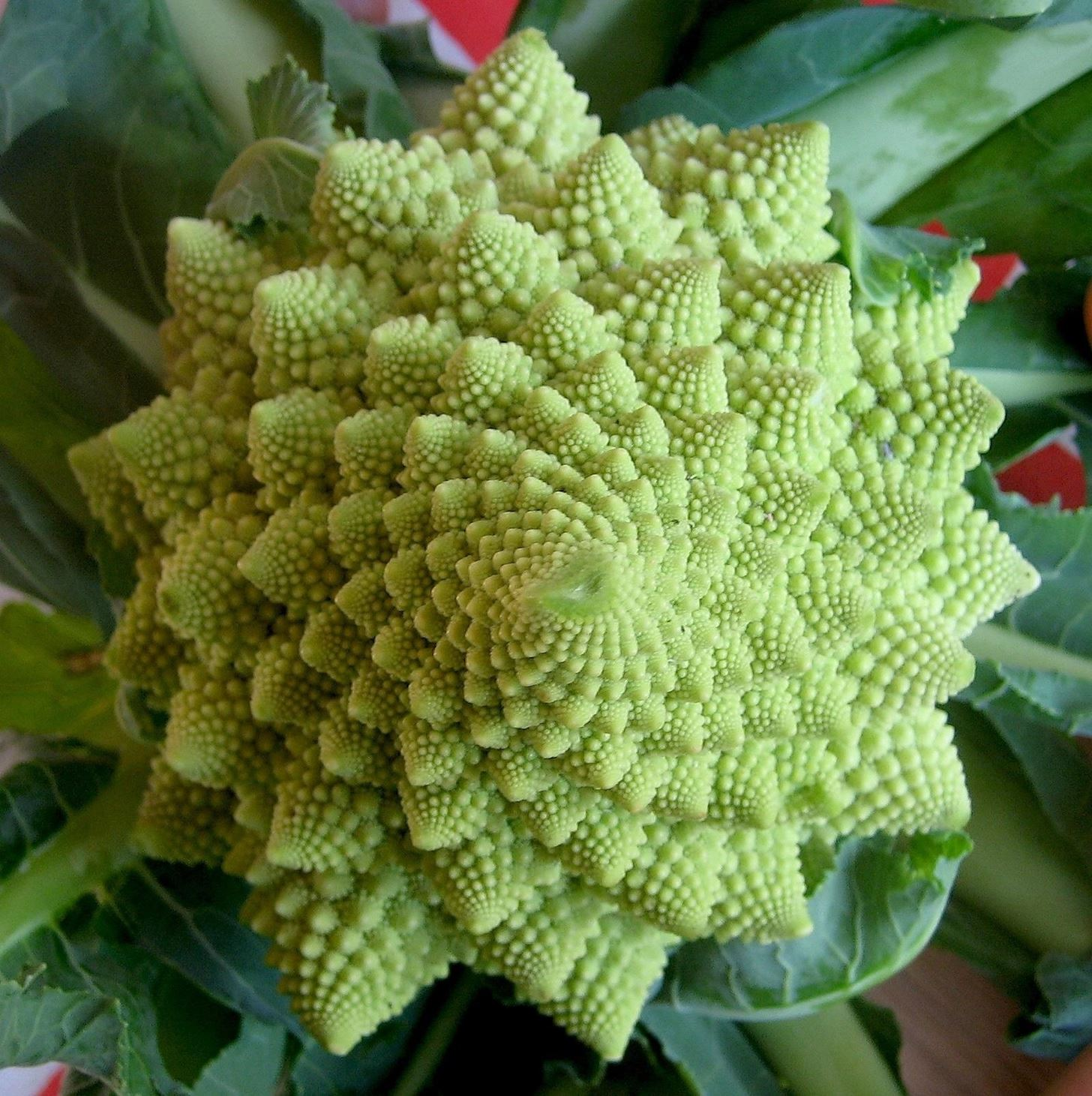 This Cauliflower Is Fractal-ly Delicious