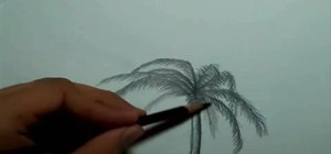 Draw a palm tree