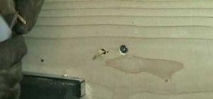 Repair stripped screw holes in wood