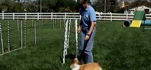 Train your dog on weave poles