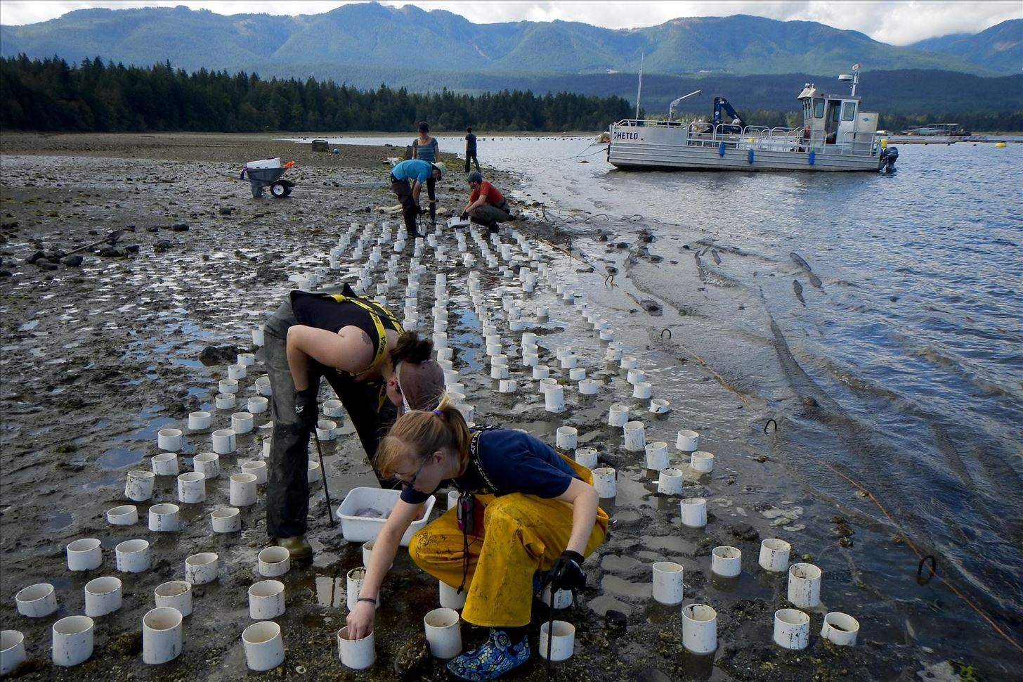 Weird Ingredient Wednesday: The Geoduck, a Mollusk as Weird as It Is Phallic