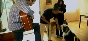 Calm a dog that barks at guitar playing