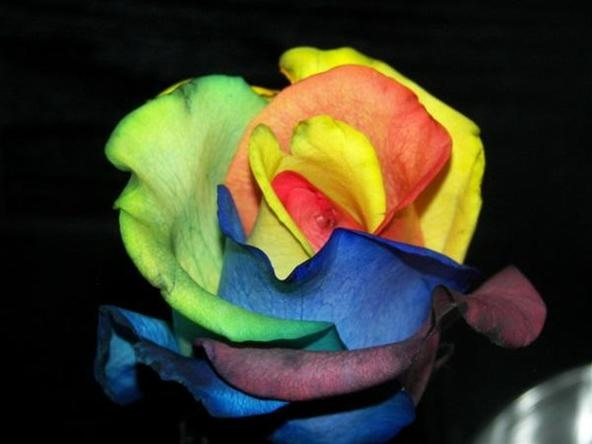HowTo: Grow Psychadelic Roses