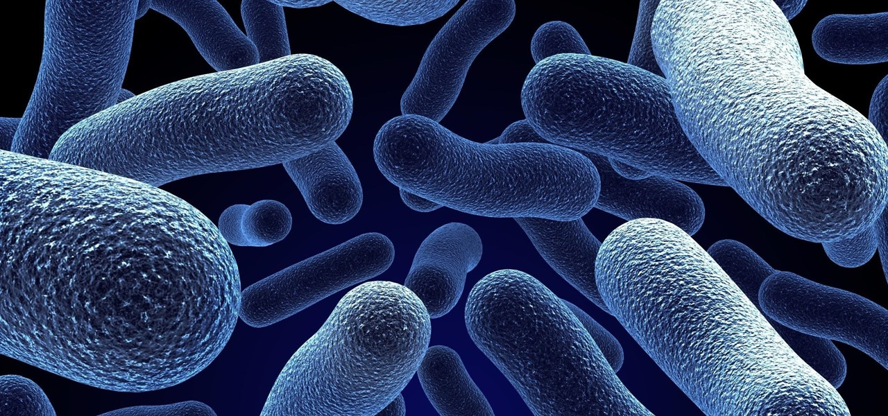 How Gut Bacteria Can Make Chemo More Effective