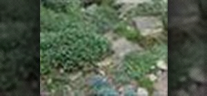 Develop a rock and scree garden